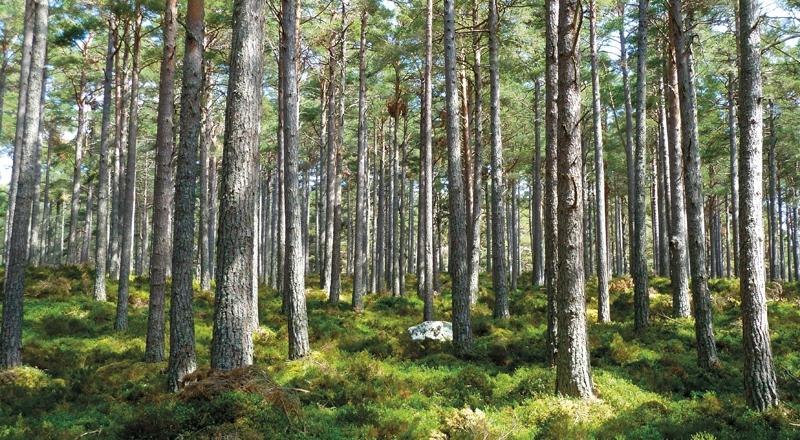 1_medio ambiente ecologia naturaleza ventiladores -13